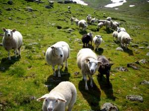 Norwegen2009 07-01 Tveit-Endredalen2 (21)